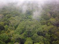 How salt in the rainforest becomes clouds
